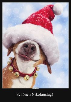 Funny Christmas Animals Dogs 70 Ideas For 2019 Love My Dog, Puppy Love, Funny Dogs, Cute Dogs, Funny Animals, Cute Animals, Christmas Animals, Christmas Humor, Christmas Cards