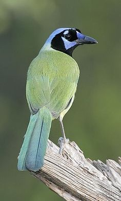 Information About Birds, Beautiful Birds, Animal Pictures, Cute Animals, Wildlife, Creatures, Healthy Recipes, Pets, Nature