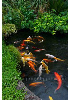 Koi Life Vinyl Decal Sticker Garden Landscaping Landscape Koi Fish Pond Bog