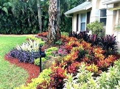 Get advice for taking pleasure in a beautiful Florida Gardening, surroundings, or front yard. Our specialists show you everything necessary to really Florida gardening and landscaping Florida Landscaping, Florida Gardening, Backyard Pool Landscaping, Tropical Landscaping, Front Yard Landscaping, Backyard Landscaping, Landscaping Ideas, Tropical Gardens, Backyard Ideas