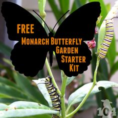 The National Wildlife Federation is offering a free Monarch butterfly garden starter kit to anyone who takes the pledge to help protect and restore the Monarch butterfly population. garden Do you miss seeing the Monarch butterflies? Monarch Butterfly Habitat, Butterfly House, Butterfly Garden Kit, Butterfly Plants, Hummingbird Garden, Dream Garden, Gardening Tips, Organic Gardening, Container Gardening