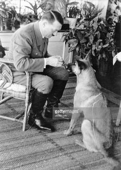 ADOLF HITLER . Chancellor of Germany, 1933-45. Hitler with a German shepherd in Haus Wachenfeld on the Obersalzberg Mountain near the town Berchtesgaden. Photograph c1934.