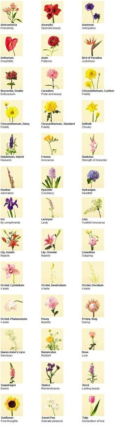 Flowers and their meanings