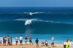 When Surfing at Pipeline, Whales Get First Priority