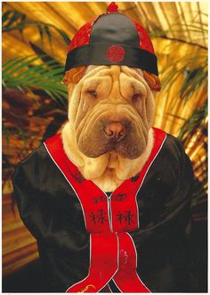 Chinese Shar pei   - - -  from: My Favorite Funny Postcards