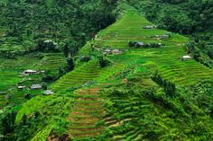 The Phu La plant on terraced fields. This rice field is in Hoang Su Phi, which is in the northeastern part of the Ha Giang province, Vietnam Hoi An, Raw Photography, Landscape Photography, Hanoi, Beautiful World, Beautiful Places, Beautiful Vietnam, Hotels, Amazing Nature
