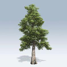 cedar 명사 [n] 1. 히말라야삼목 2. 삼나무 목재 형용사 [a] 1. 삼나무로 만들어진