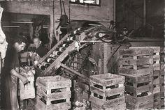 Año 1955 Operarios de Vichy Catalan empaquestando botellas en la planta embotelladora de Caldes de Malavella. Foto: Sans