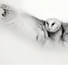 flying barn owl pencil drawing art print by TheHauntedHollowTree, $35.00