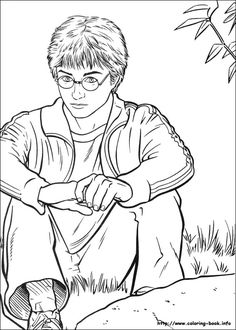 hedwig harry potter's owl coloring page  summer camp