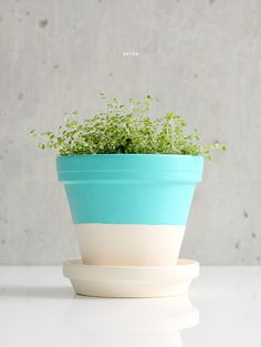 DIY painted plant pots.