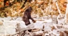 Random humor:P  No Need to Replace Himalayan Yeti with Unknown Species of Bear, Says New Study