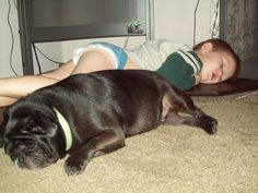when something so innocent as falling asleep under the desk with your pug,  can make such a cute and wonderful memory!