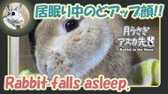 居眠り中のどアップ顔!!【ウサギのだいだい 】 2017年11月24日