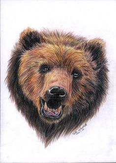 Grizzly bear by CsimmBumm.deviantart.com on @deviantART
