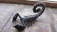 Paracord Scorpion