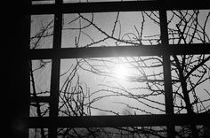 postmeridiem : rare. // ilford xp2, 35mm Photography, Fotografie, Fotografia, Photograph