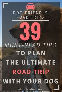 55 Best Dog Friendly Travel Tips Images Travel Tips Dog Travel