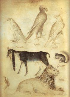 Giovannino de'Grassi. Taccuino dei disegni (carnet de croquis), vers 1390, réalisé pour la cour des Visconti. Bergame, Biblioteca Civica A. Mai.