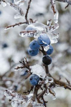 Die 209 Besten Bilder Von Blumen Und Garten Im Winter In 2019