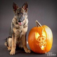 Pumpkin carving goals! German shepherd portrait...wow.                                                                                                                                                                                 More