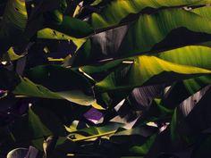 Dschungelgrüne Pflanzenwelt © Stefanie Moshammer für ZEITmagazin
