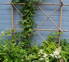 DIY: Bamboo Trellis - if you know anyone who has bamboo growing in their yard, they will be very happy to share! To build a trellis, lay out a pattern on the lawn, use a piece of wire & some jute to join the intersecting pieces & place against a wall in the yard.