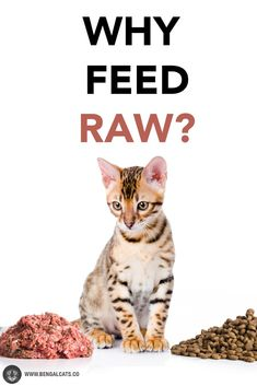 How a Raw Food Diet Can Benefit Your Cat's Life via @BengalCats