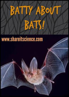 Share it! Science News : Batty About Bats! Great info and learning resources.