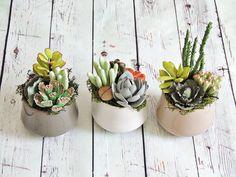 Succulente, Piante grasse, Decorazioni per la casa, Piante decorative, Fiori…