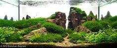 Fish tank Aquascape ....