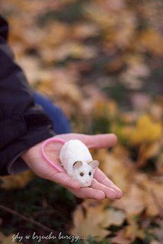 Gdy w brzuchu burczy... : Halloweenowe myszki