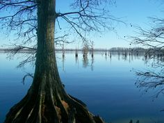 For the beauty of the earth!  Reelfoot Lake, TN.