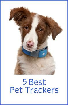 If you lose your pet, a pet tracker can help you find your pet and possibly save your pet's life. There are powerful systems that come with a hefty price tag, but there are also less expensive trackers on the market too that work pretty well; it all depends on your needs. Here are five of the best rated and reviewed trackers on the market...  ... see more at PetsLady.com ... The FUN site for Animal Lovers