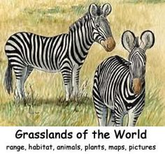 Grasslands of the World Index -- Exploring Nature Educational Resource