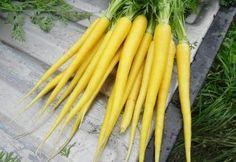 Carrot Solar Yellow D126CAR (Yellow) 500 Open Pollinated Seeds by David's Garden Seeds David's Garden Seeds http://www.amazon.com/dp/B01D3O76ZG/ref=cm_sw_r_pi_dp_jV18wb0PNA6KG