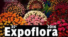 LEVEI MEU FILHO: EXPOFLORA 2016– HOLAMBRA – SP