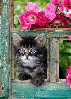 Kitty by the window