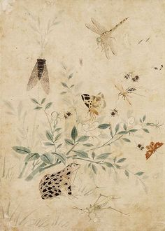 (Korea) 초충도 by unknown artist. Chinoiserie, Sparrow Art, Dragonfly Wall Art, Korean Painting, Japanese Artwork, Plant Painting, Nature Drawing, Silk Art, Korean Art