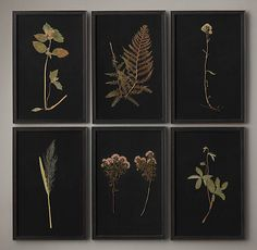 Hand-Pressed Botanicals on Linen Black