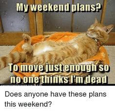 These Animals Have Some Great Plans For The Weekend (Memes) Cheezburger Image 9205531392 Best Funny Jokes, Funny Animal Memes, Cute Funny Animals, Funny Cute, Hilarious, Silly Cats, Cute Cats And Kittens, Funny Kittens, Grumpy Cats