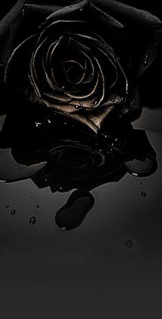 Log in - Black Rose Bouquet, Black Rose Flower, Beautiful Rose Flowers, Black Flowers, Red Roses, Black Roses, Exotic Flowers, Gothic Wallpaper, Flower Wallpaper