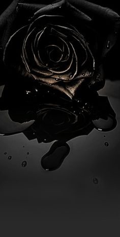 Log in - Gothic Wallpaper, Black Aesthetic Wallpaper, Dark Wallpaper, Nature Wallpaper, Aesthetic Wallpapers, Black Rose Bouquet, Black Rose Flower, Black Flowers, Red Roses
