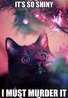Cats and Christmas lights