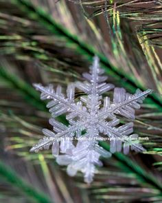 Real Snowflake Photography