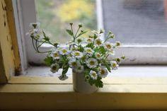 Solvi's tiny bouquet of feverfew  Justine Hand, Designskool