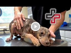Let's Change this Monster Back into a Puppy - Cute Puppies Videos Kittens And Puppies, Cute Puppies, Cute Dogs, Rescue Dogs, Animal Rescue, Cute Puppy Videos, Save Animals, Animal Projects, Make You Cry