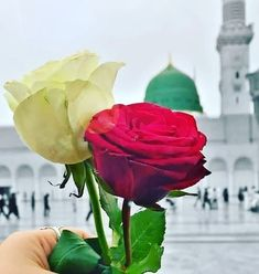 Muslim Pictures, Islamic Pictures, Purple Roses Wallpaper, Ramadan, Islamic Wallpaper Hd, Mecca Wallpaper, Best Islamic Images, Mecca Kaaba, Green Dome