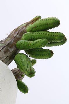 Cactus & http://www.pinterest.com/pin/210050770094497148/