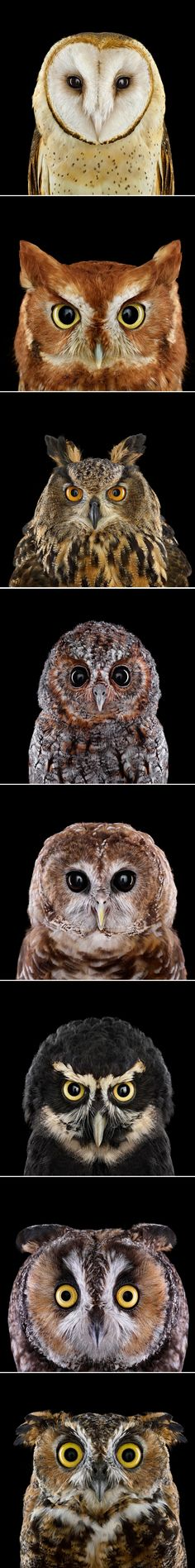 Who's Who: These owls may wear the same game face, but when it comes to personality, they're as different as day and night.